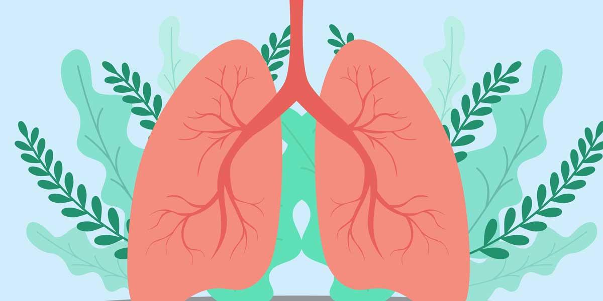 aparato circulatorio video entrada corazon y vasos sanguineos 3 eso