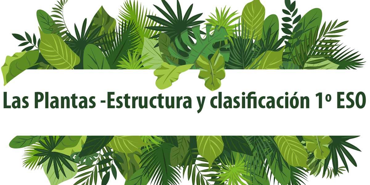 las plantas estructura y clasificacion 1 eso