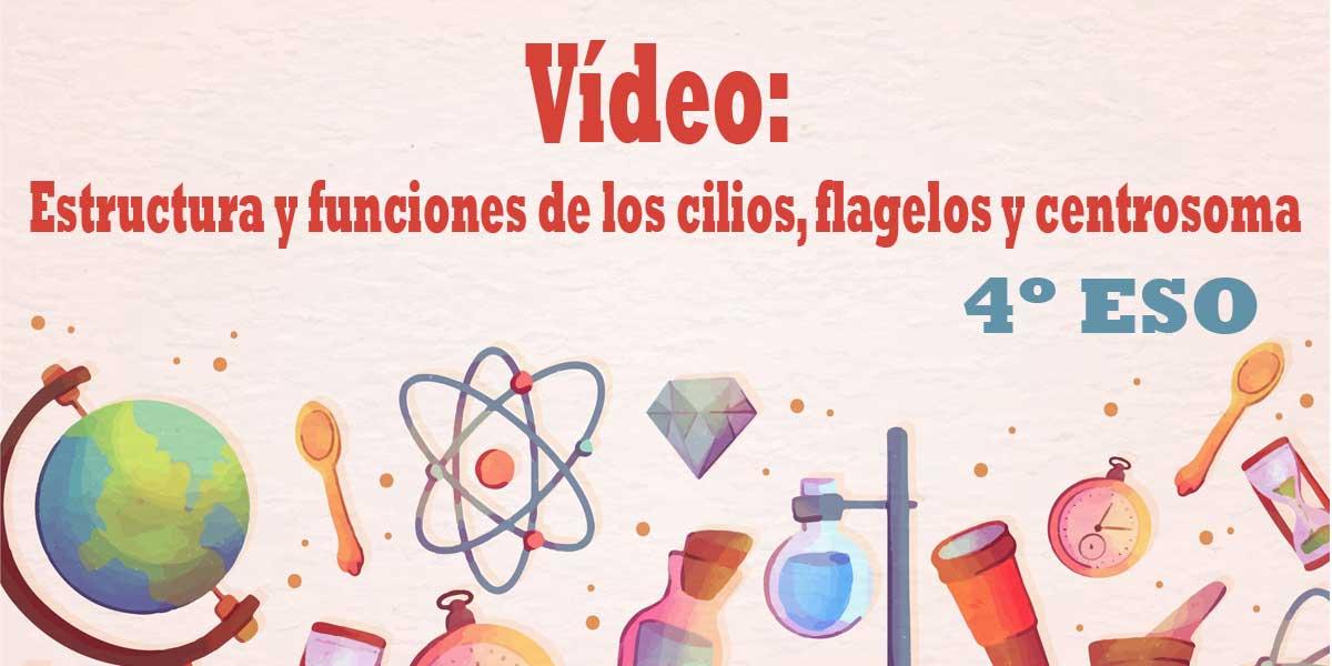 Vídeo Estructura y funciones de los cilios, flagelos y centrosoma 4 ESO