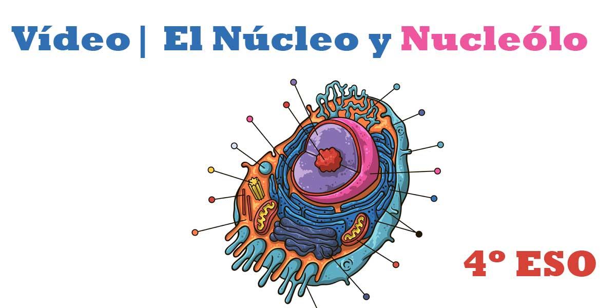 Vídeo Todo sobre el Núcleo y Nucléolo 4 ESO
