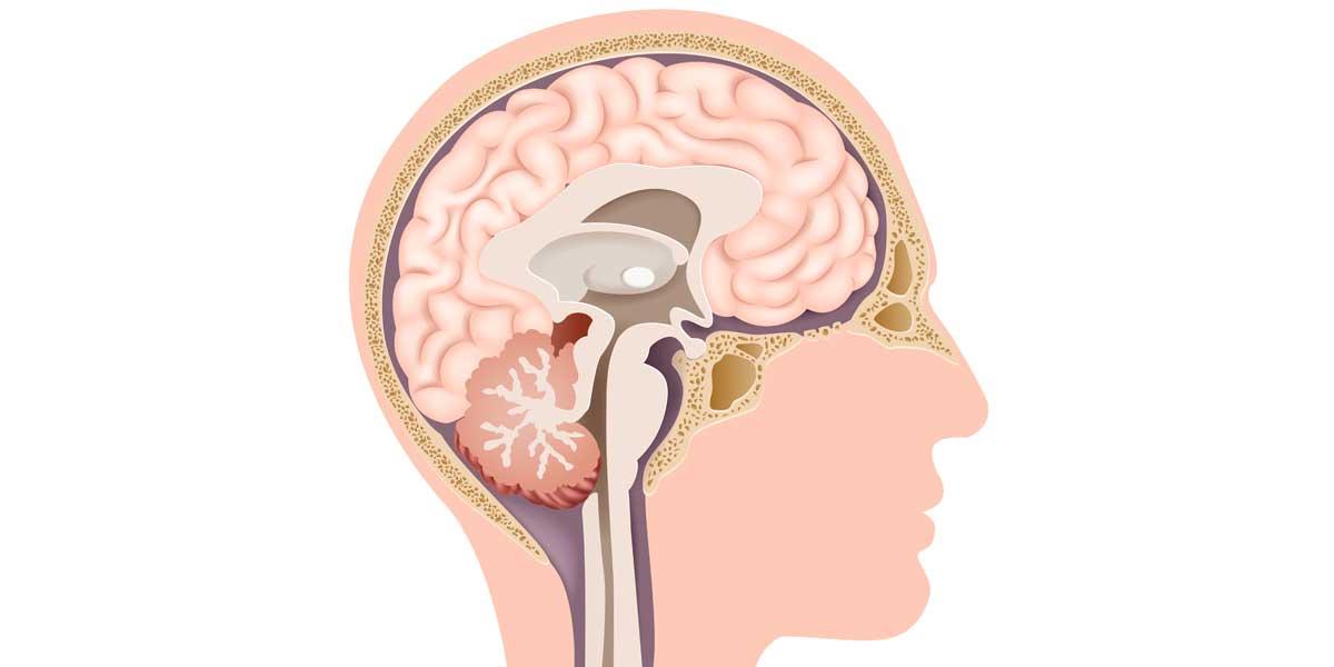 video El sistema endocrino y las hormonas 3 ESO