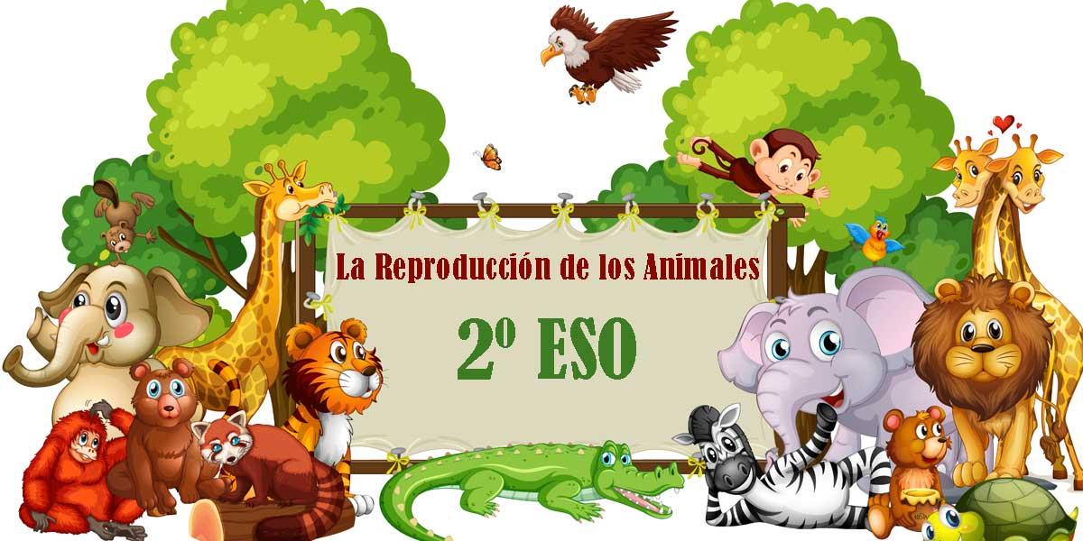 LA REPRODUCCIÓN DE LOS ANIMALES 15 Ejercicios resueltos 2 ESO