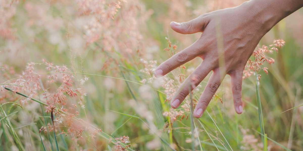 Vídeo Los sentidos Los receptores sensoriales EL TACTO