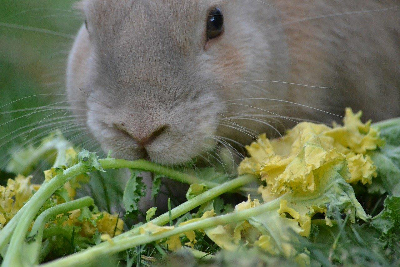 Descargar ejercicios resueltos sobre la Nutrición de los Animales 2º ESO