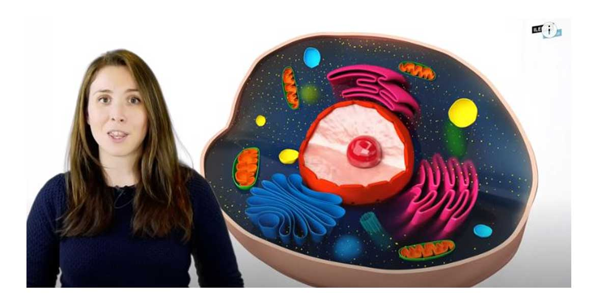 ¿Sabes que es una célula eucariota? No te pierdas este fantástico Vídeo