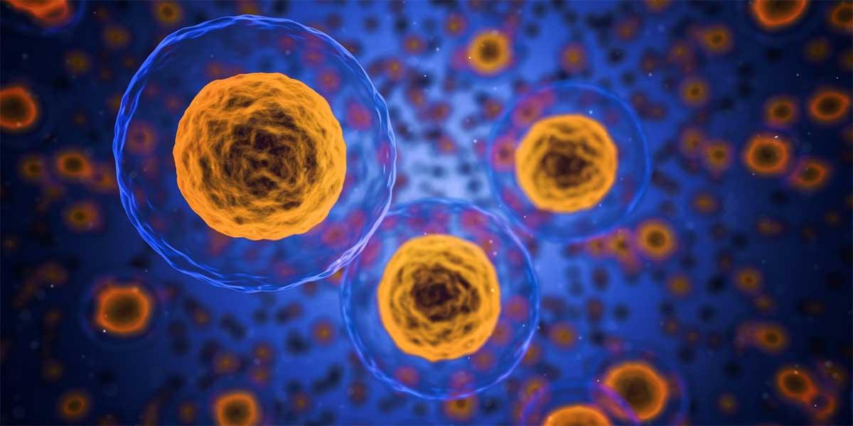 5 Minutos en la Célula: El Citoplasma y el citoesqueleto
