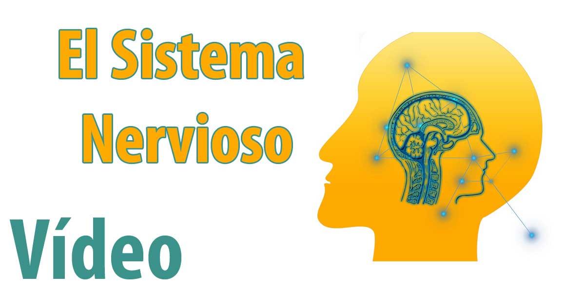 El Sistema Nervioso: Biología 3º ESO