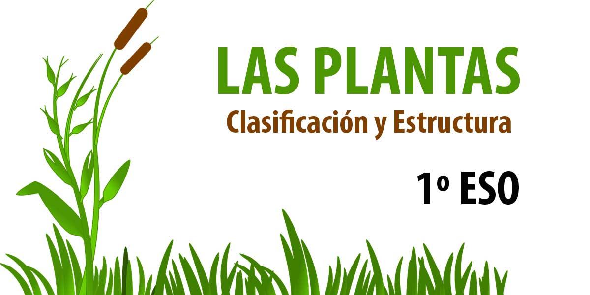 LAS PLANTAS. Clasificación 1º ESO